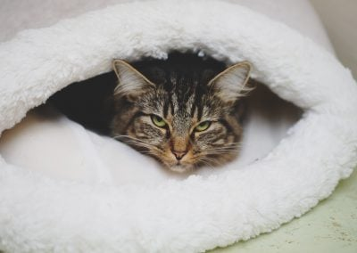 CatsOnVacation_1