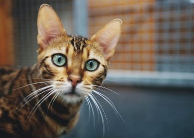 CatsOnVacation_12