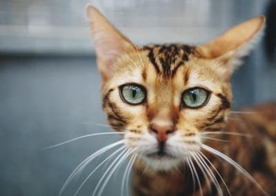 CatsOnVacation_13