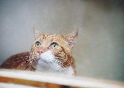 CatsOnVacation_14