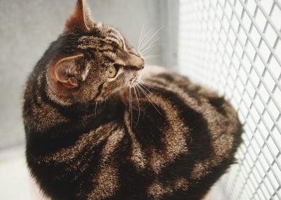 CatsOnVacation_16