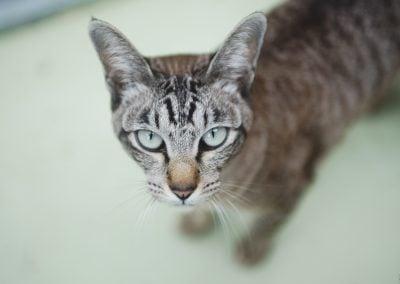 CatsOnVacation_17
