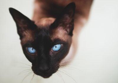 CatsOnVacation_18