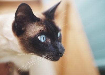 CatsOnVacation_19