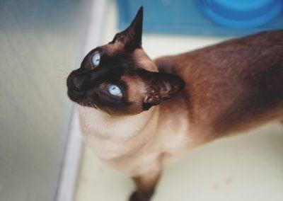 CatsOnVacation_20