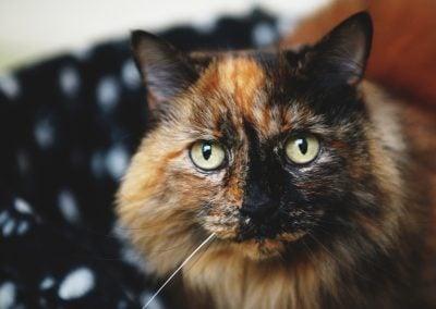 CatsOnVacation_6
