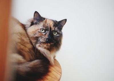 CatsOnVacation_7